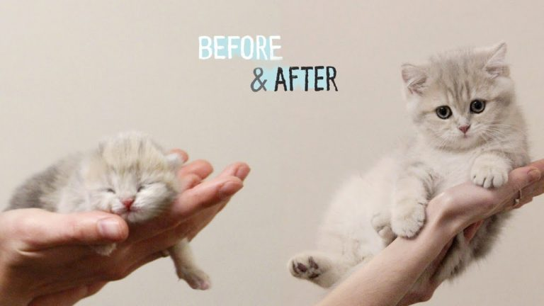✔️ HOW Baby Kitten Amelia GROW: 0-12 Weeks! 😍 BEFORE & AFTER 1