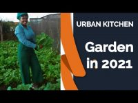 how to start a kitchen garden 10