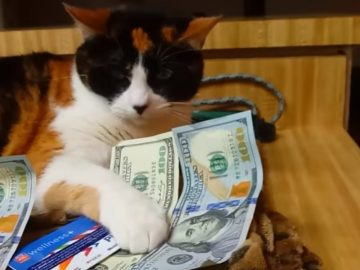 Greedy cat refuses to share her Rumble earnings