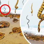 Mysterious Place Where It Rains Snakes, Spiders, and Unearthly Jelly Blobs