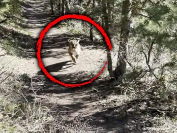 How Hiker Survived Being Stalked by a Mountain Lion