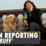 Dog steals microphone & hearts | Moscow reporter | Caught on camera | Latest English News