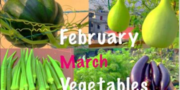 16 Best Summer Vegetable Seeds To Sow In February And March In Container At Home Garden 17