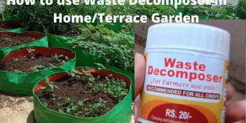 How to prepare and use Waste Decomposer for home kitchen garden | seedbasket | terrace garden 16