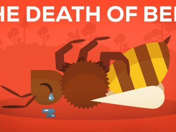 The Death Of Bees Explained – Parasites, Poison and Humans