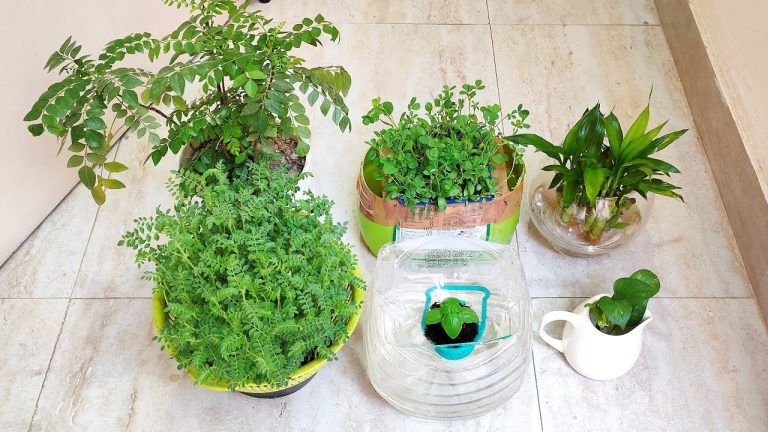 Hydroponic system के बारे में जाने सबकुछ | Grow plants in water at home | Soil less kitchen garden 1