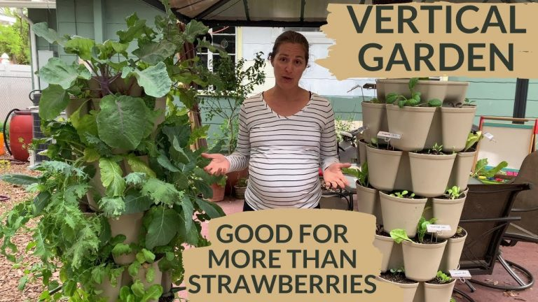 Small Space Container Vegetable Gardening 1