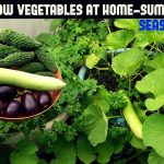 How To Grow Vegetables in Containers-Summer/Rainy Season Special 1