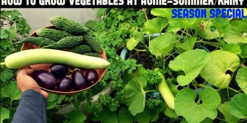 How To Grow Vegetables in Containers-Summer/Rainy Season Special 18