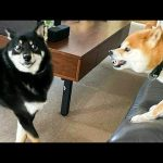 Funniest Animals 🐧 - Funny animal videos can't help but laugh 2021 😁 - Cutest Animals Ever 4