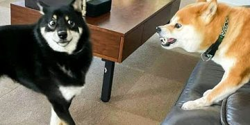 Funniest Animals 🐧 - Funny animal videos can't help but laugh 2021 😁 - Cutest Animals Ever 13