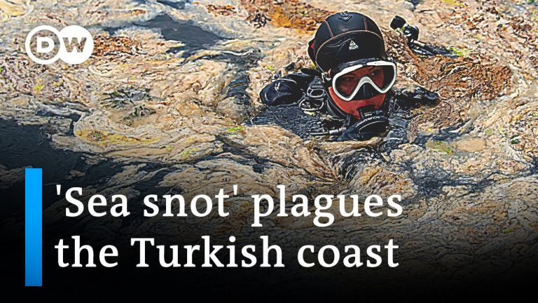 'Sea snot' in Turkey is part of a growing environmental threat   DW News