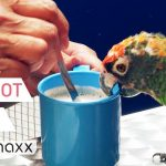 Drinking Coffee, Singing And Playing With Parrots - Parrot Café Bochum, Germany