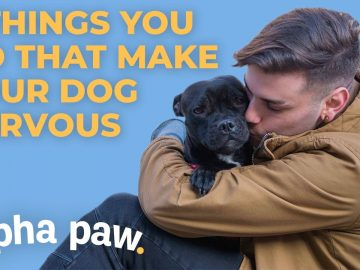 5 Things You Do That Make Your Dog Nervous
