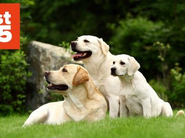 25 Things You Didn't Know About Dogs
