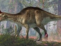 Duck-billed dino from Argentina had a foot tumour and tail fractures 32