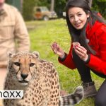 Trying To Be An Animal Ranger For One Day In Europe's Biggest Safaripark