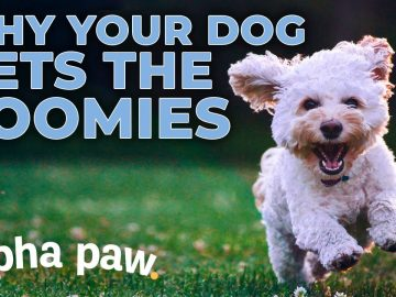 Why Your Dog Gets The Zoomies (And What To Do About It)!