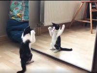 Cat and Mirror 21
