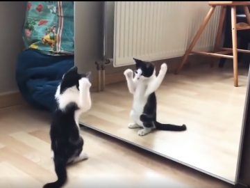 Cat and Mirror 5