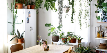 https://www.bangboxonline.com/2021/08/23/do-you-keep-plant-in-your-kitchen/