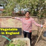 Awesome Indian Vegetable Garden is ready now in England| Gardening Vlog 1