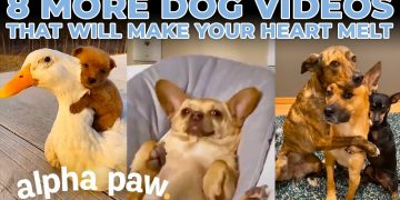 8 Dog Videos That Will Melt Your Heart!