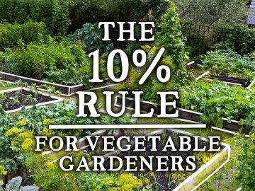 """The Incredible """"10% Rule"""" That Every Gardener Should Use   Increase Yields & Pollinators 5"""