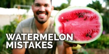 6 Watermelon Growing Mistakes To Avoid 🍉 11
