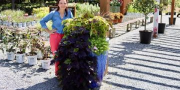 Early September Nursery Tour | Gardening with Creekside 9