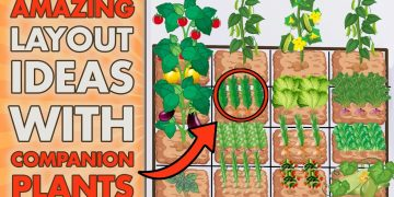 5 SQUARE FOOT GARDENING Layout Ideas With COMPANION PLANTS (Beginners - Get Inspired) 16