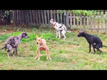 Funniest Animals Ever 🐧 - Awesome Funny Animals' Life Videos - Funniest Pets 😇 6
